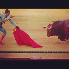 vidicom bull